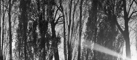 Dark Hour/Light Moment by Anthony Goicolea